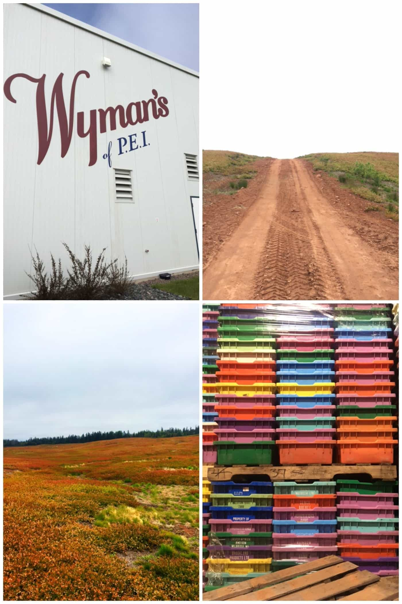 Traveling to Prince Edward Island with Wyman's of Maine to learn about wild blueberries!