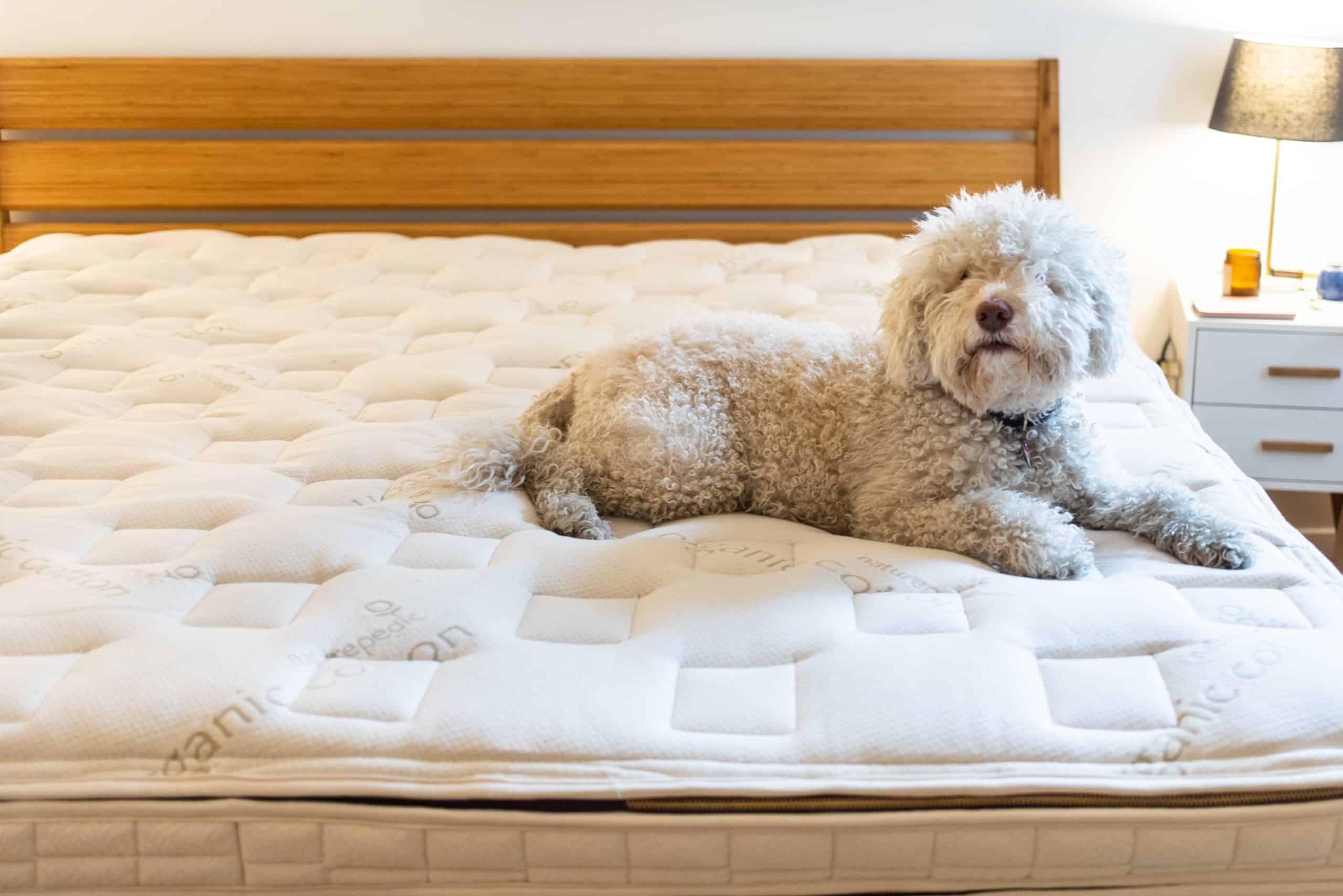 Naturepedic EOS Pillow Top King Mattress
